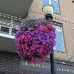 purple flower bush