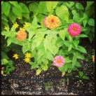 pink and orange flower mix