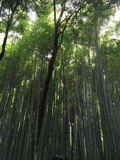 bamboo path1