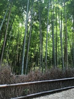 bamboo path2